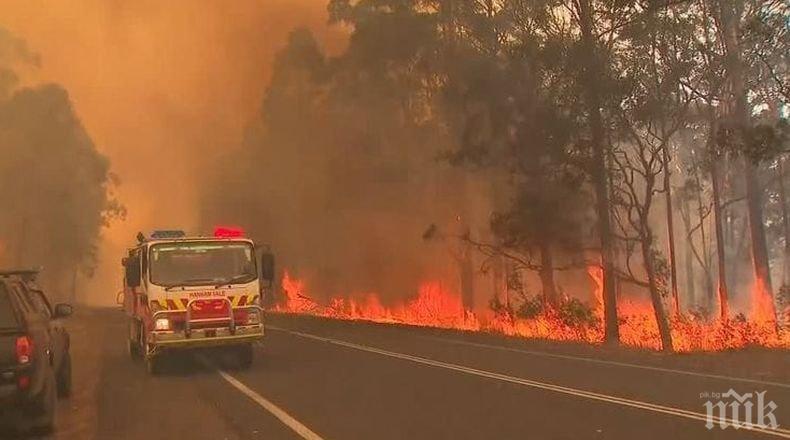 От горските пожари в Австралия са загинали милиони животни