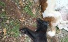 ТЕМИДА: Пет години не могат да накажат убиец на куче