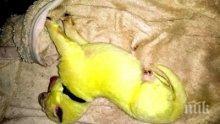 В САЩ се роди зелено кученце, кръстиха го Хълк