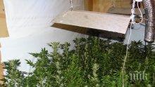 Криминалисти разбиха домашната наркооранжерия на 20-годишен в Елин Пелин (СНИМКИ)