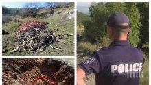 УЖАСЯВАЩА НАХОДКА: Откриха яма на нелегални касапи с трупове на животни в Стара Загора