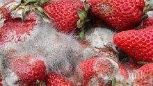 ТИХИ УБИЙЦИ: Мухъл и плесени ни дебнат от храните