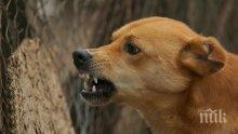 ОСТРИ ЗЪБИ: Бездомно куче нахапа 84-годишна старица в Дупница (СНИМКА)