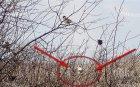 ЧУДО: Бяло врабче спасява село