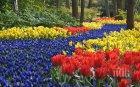 Амстердам откри сезона на лалетата