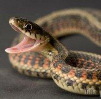 уникум мъж плаши съседи опасни змии асеновград