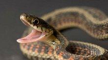 Уникум! Мъж плаши съседи с опасни змии в Асеновград