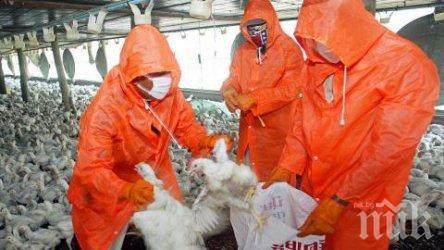 ЗАРАЗА: Птичи грип в Чехия, властите с извънредни мерки