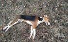 """Софиянци от """"Люлин"""" бият тревога: Системно поставят отрова за кучета край училище"""