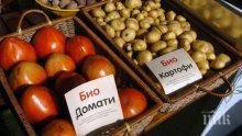 Хванаха гръцки био домати менте