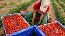 Лондон с лоши новини за всички работещи българи