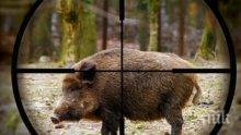 Убиха прасе с африканска чума в землището на Стралджа