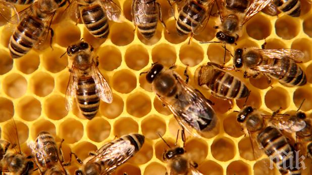ДА СЕ ЗНАЕ: Пчелата е най-важното живо същество на Земята