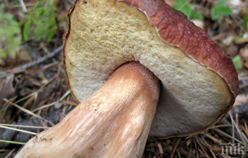 ИЗУМИТЕЛНО: Учени откриха най-старата гъба в света