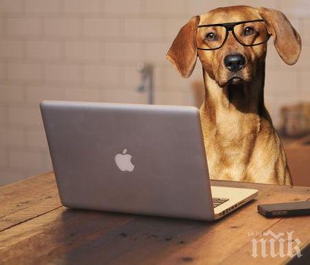 Нова мода у нас - с куче на работа