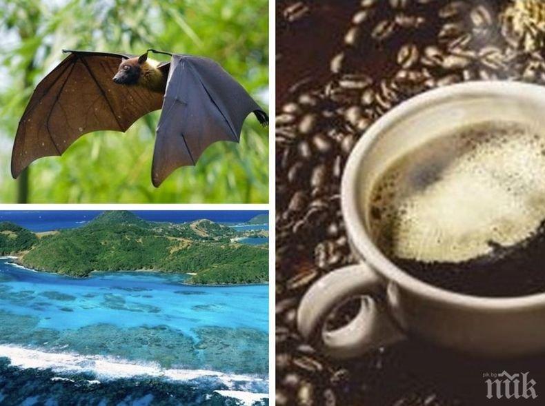 За ценители: В Мадагаскар хит е кафе, което...