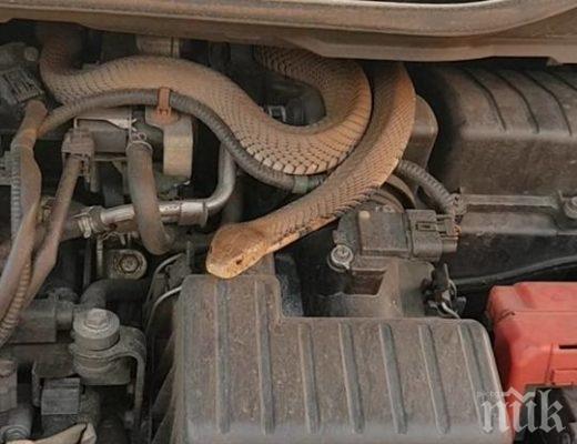 Пожарникари уловиха змия в мазе на къща