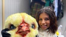 Дивна пусна пародия на пиленцата на Милко, но я заринаха с хейт (ВИДЕО)