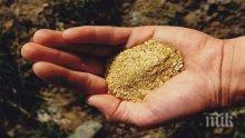 Откриха огромни залежи от злато в Босилеградско