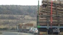 СЕЧ: Залагат изрязването на 110 000 декара гори