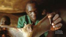Продават месо от прилети и плъхове в Индонезия, въпреки заплахата от коронавирус