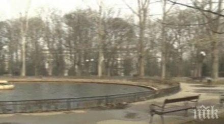 Предстои ремонт на езерото с лилиите в Борисова градина в столицата