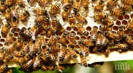 НАПАСТ: Гладни кълвачи нападат пчелините в Кюстендилско