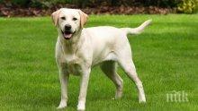 Нагъл крадец открадна куче пред магазин във Варна