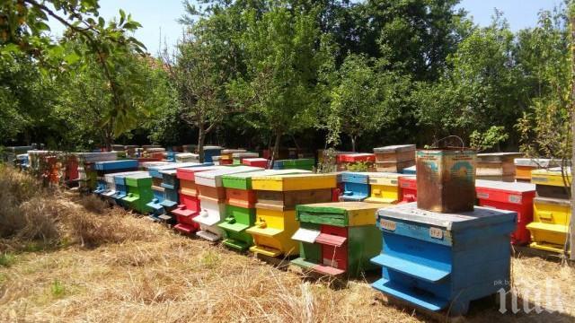 Над 6 млн. лева тръгват към пчеларите