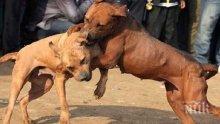 Арестуваха мъж заради нелегални кучешки боеве в Шуменско