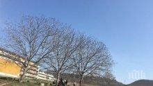 Цигани нарушават карантината в Девня - цъкат комар в изоставена беседка