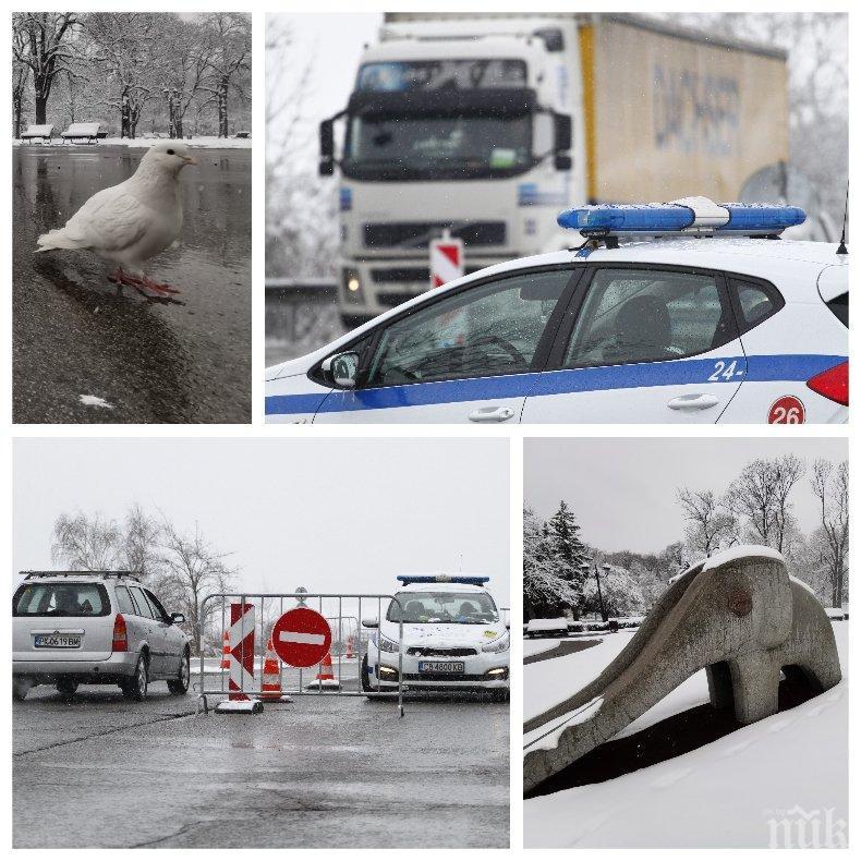 САМО В ПИК! Добра поличба: Бели гълъби полетяха над Борисовата градина. Снегът по поръчка залости софиянци по домовете им - вижте какво е положението на КПП-тата... (ФОТОРЕПОРТАЖ)