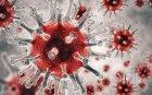 Случаите на коронавирус в света са над 664 000