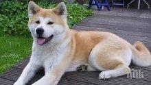 ВМЕСТО ТЕСТОВЕ: Кучета надушват заразени с COVID-19