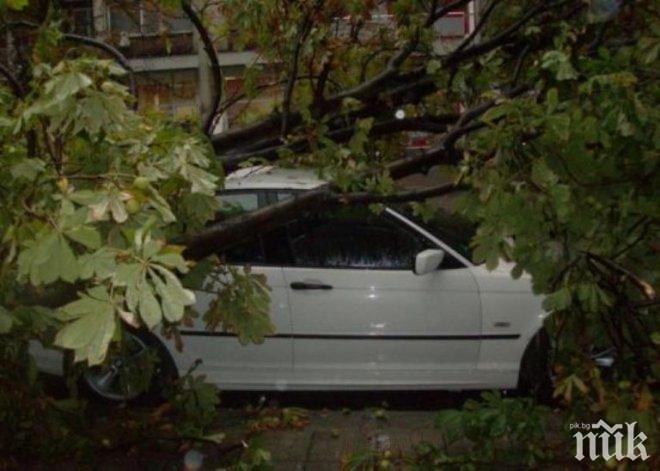 ЗАД ВОЛАНА: Мъртво пиян се разби край Силистра