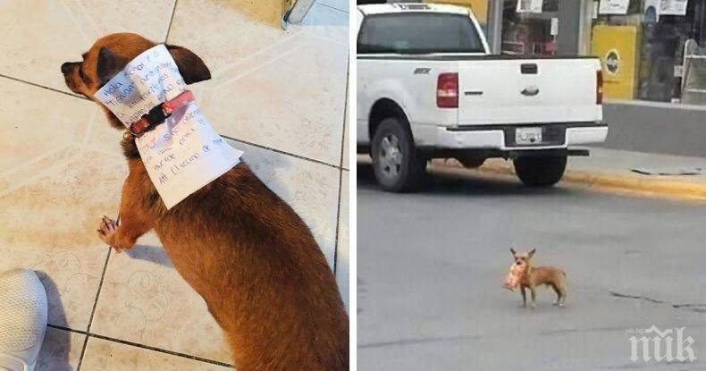Мексиканец под карантина прати кучето си да му купи чипс (СНИМКИ)