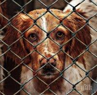 ЛЪЧ НАДЕЖДА: Шънджън е първият китайски град, който забрани яденето на кучета и котки