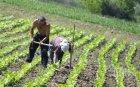 ОПАСНО: Румъния пуска берачи на аспержи да напуснат страната