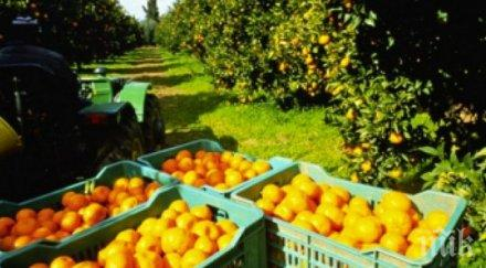 гръцките фермери търсят сезонни работници