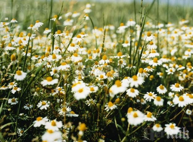 БЕЗЦЕННИ СЪВЕТИ: Ето какво е COVID-19 и как да го победим с дишане и билки