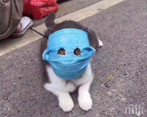 ШОК! Около 15% от котките в Ухан са заразени с новия коронавирус