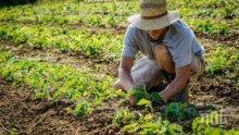 Работници от Румъния, Полша и България заминават за сезонна работа в Германия