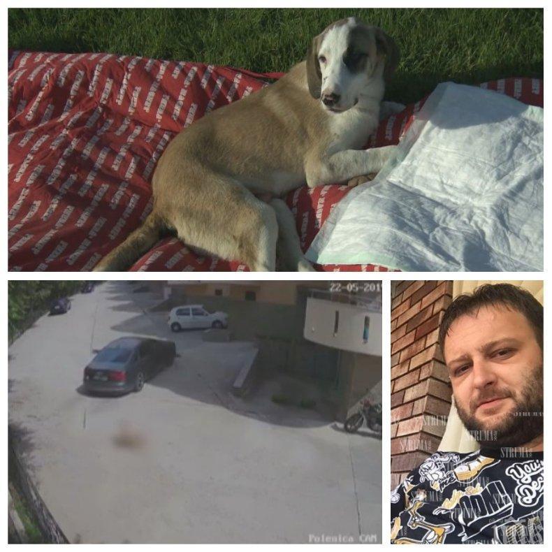 ВЪЗМЕЗДИЕ: Запалиха буса на Иван Навяков от Сандански, който осакати за цял живот кучето Лиско