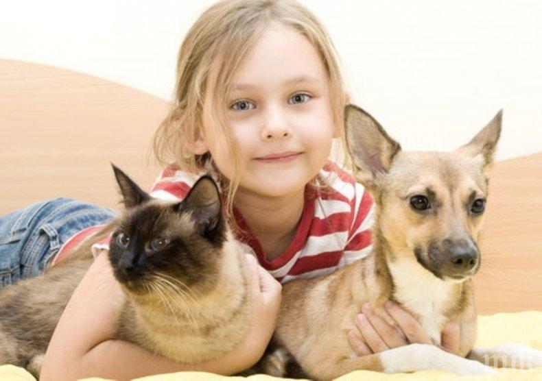 Зоопсихолог обясни как карантината влияе на кучетата и котките