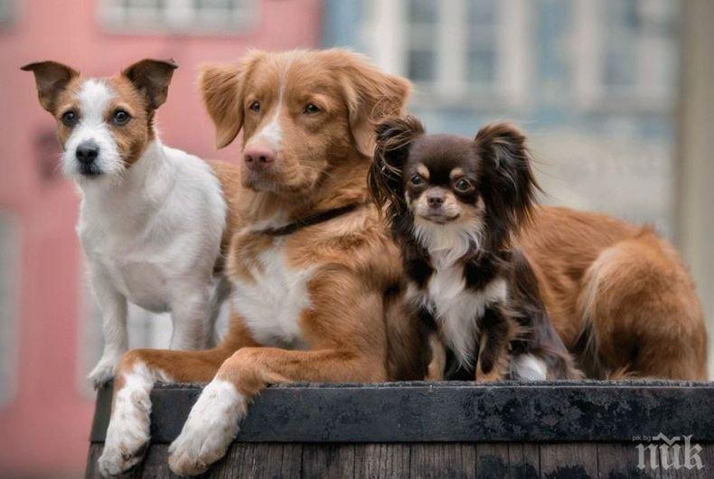 НАГЛОСТ: Крадла задигна кутия с дарения за бездомни животни (ВИДЕО)