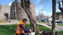 Общински служители се грижат за бездомни животинки в Турция