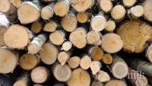 Затвориха обект за търговия с дървесина