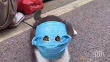 ЗАРАЗЕНИ: Две домашни котки в Ню Йорк пипнаха коронавирус