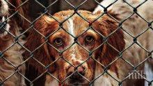 Масово осиновяване на животни в Америка