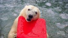 ФАТАЛНА ЛЮБОВ: Разгонен мечок уби женската си в руски зоопарк